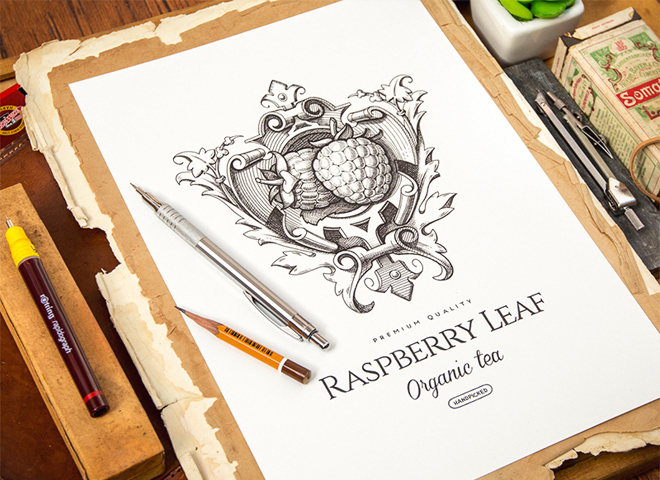 raspberry leaf logotype sketch artwork