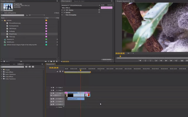 basic editing premiere pro tutorial video