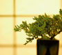 Simplify and Improve Your Designs with the Bonsai Tree Method