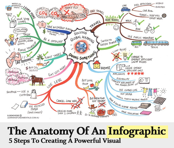 Infographics Anatomy