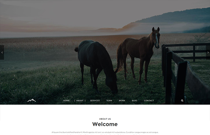 retina wordpress theme
