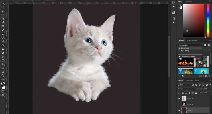 An Introduction to Photoshop Selection Tools